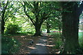 ST8807 : Path through the trees by andrew auger