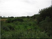 C2223 : Scrub land near Carn Lough by Willie Duffin