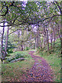 NO0440 : Birnam Hill path by Richard Dorrell