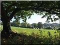 SX8854 : View beneath an oak, Higher Greenway by Derek Harper