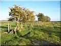 NU1303 : Boundary fence by David Clark