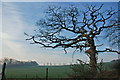 SN0107 : Old tree on winter evening by Hugh Lort-Phillips