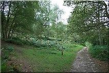 TQ1148 : Bridleway on Abinger Roughs by Hugh Craddock