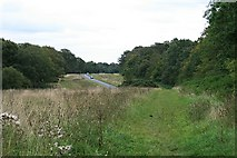 TQ1350 : Ranmore Common Road: east from Hole Hill Lane by Hugh Craddock