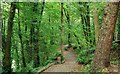 J3369 : Belvoir forest, Belfast (3) by Albert Bridge