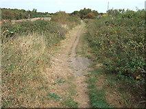 TF6830 : Footpath along the old railway line, Dersingham by Richard Humphrey