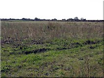 SJ7283 : More Fields Off Bucklowhill Lane by Peter Whatley