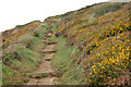 SM8422 : Colour by the coastpath above Newgale by Andy F