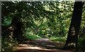 J3370 : The Lagan Meadows walk, Belfast (15) by Albert Bridge