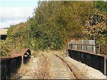 NO3700 : Trespassing on the railway/shrubbery by Richard Webb