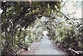 SX9191 : Wisteria arch in the Pleasure Ground, St Thomas, Exeter by nick macneill