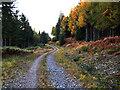 NN5859 : Forest track north of Loch Rannoch by Dr Richard Murray