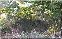 SH6179 : The motte of Fat Hugh's Aberlleiniog Castle by Eric Jones