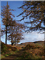 NG2549 : Path onto the moor, Dunvegan by Richard Dorrell