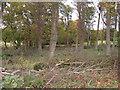SE9544 : Woodland, Dalton Hall Estate by JThomas