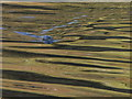 NG9407 : Harbour seal, Loch Beag. by sylvia duckworth