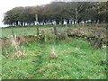 SJ9890 : Footpath near Brown Low by Chris Wimbush