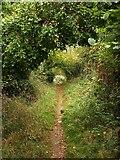 SX9066 : Bridleway to Browns Bridge Road by Derek Harper