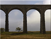 SD7579 : Ribblehead Viaduct by michael ely