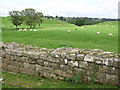 NY6366 : Hadrian's Wall and pastures at Gilsland by Mike Quinn