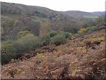 NS7407 : Autumn colours in the Euchan Water Glen by Oliver Dixon