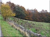 NX8299 : Autumn colours by Oliver Dixon