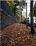J3271 : Autumnal leaves, Cadogan Park by Rossographer