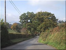SX8878 : Road leading down to pass Ugbrooke House by Sarah Charlesworth
