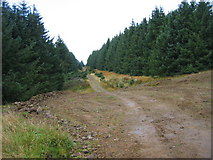 NT8912 : Forest road and bridleway by Les Hull