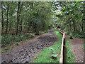 SJ8065 : Bridle path at Brereton Heath by Jonathan Kington