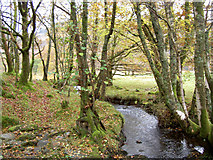 SH7357 : The stream from the footbridge by Ian Greig
