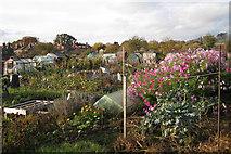 SP3365 : St Mary's allotments, Radford Road by Robin Stott