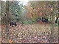 SE8648 : Grazing Land near Garforth Farm by JThomas