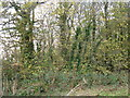 SE8448 : Bratt Wood by JThomas