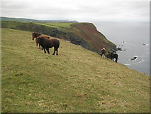 SX1193 : Ponies above the coast by Philip Halling