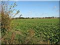 TG2600 : View NW across field beside Leavy Oak Lane by Evelyn Simak