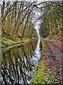 SJ8611 : Shropshire Union Canal, nr Wheaton Aston by Paul Buckingham