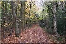 TQ4660 : Track in Hayman's Wood by David Anstiss