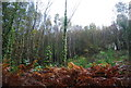 TQ7413 : Autumnal Bracken in Fore Wood by N Chadwick