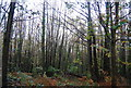 TQ7413 : Coppiced trees, Fore Wood by N Chadwick