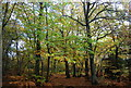 TQ7412 : Autumn in Fore Wood by N Chadwick