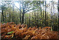 TQ7412 : Autumnal coloured Bracken in Fore Wood by N Chadwick