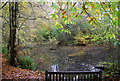 TQ7512 : Pond in Fore Wood by N Chadwick