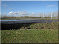 TF4603 : Strawberry fields by Hugh Venables