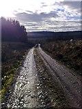 NR8460 : Forestry Track near Spion Kop by Steve Partridge