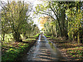 TM3097 : Autumn colours in Green Man Lane by Evelyn Simak