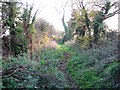 TG2102 : Public bridleway south from Mangreen by Evelyn Simak