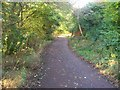 ST1480 : Taff Trail/NCN 8 route between Llandaff and Forest Farm by John Light
