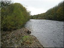 NZ2313 : River Tees near Manfield by Chris Heaton