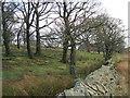 SD5594 : Dockergarths Plantation by David Brown